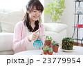 多肉植物を育てる女の子 23779954
