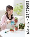 多肉植物を育てる女の子 23779955