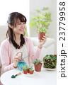 多肉植物を育てる女の子 23779958