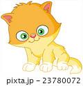 Persian kitten 23780072