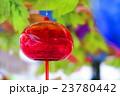 西新井大師の風鈴祭り 23780442