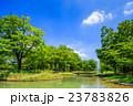 代々木公園 夏 風景の写真 23783826