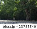 伊勢神宮 23785549