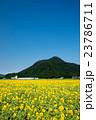 小浜市 向日葵 ひまわり畑の写真 23786711