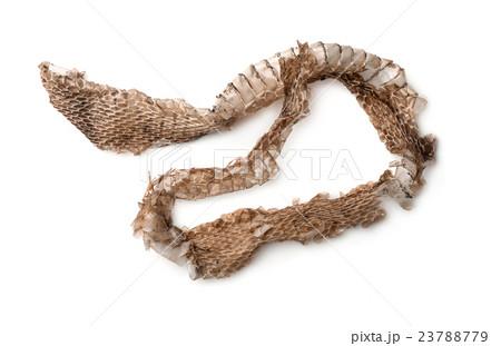 Top view of snake shedding skinの写真素材 [23788779] - PIXTA