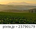 美瑛 北海道 風景の写真 23790179