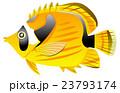 熱帯魚 魚 生物のイラスト 23793174