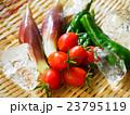 夏野菜のザル盛り 23795119