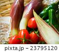 夏野菜のザル盛り 23795120