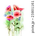 アート 芸術 花のイラスト 23801161