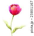 アート 芸術 花のイラスト 23801167