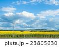 ひまわり 向日葵 野原の写真 23805630