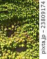 蔦のある壁のバックグラウンド 23809174