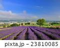 富良野 北海道 花畑の写真 23810085