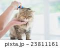 動物 ねこ ネコの写真 23811161