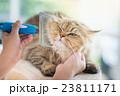 動物 ねこ ネコの写真 23811171