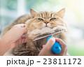 動物 ねこ ネコの写真 23811172