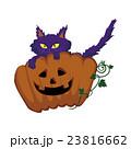 猫かぼちゃ 23816662