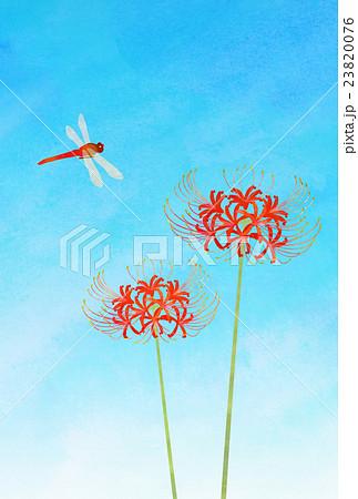 彼岸花と赤トンボのイラスト素材