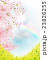 桜 菜の花 花のイラスト 23826255