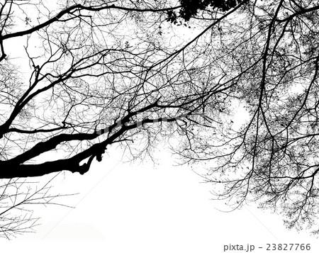 晩秋の空を見上げたときの樹木の枝 23827766