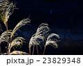 冬の枯れススキ 23829348
