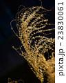 冬の枯れススキ 23830061