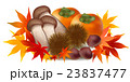 紅葉 松茸 栗 柿  23837477