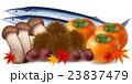 さんま 栗 松茸 柿 紅葉  23837479