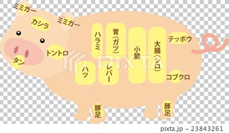 Name of internal organs of pork 23843261