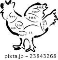 鶏肉 鶏 部位のイラスト 23843268