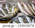fresh fish in different sizes laying on a table 23843678
