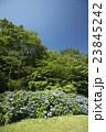 夏空と紫陽花 23845242