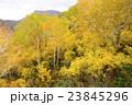 札幌国際スキー場 紅葉ゴンドラからの眺め 23845296