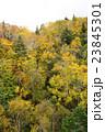 札幌国際スキー場 紅葉ゴンドラからの眺め 23845301