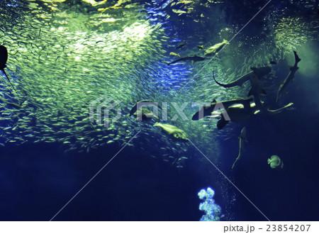 優雅に泳ぎ回るたくさんの魚たち2の写真素材 [23854207] - PIXTA
