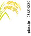 稲穂  23854220