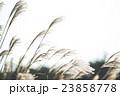 ススキ 23858778
