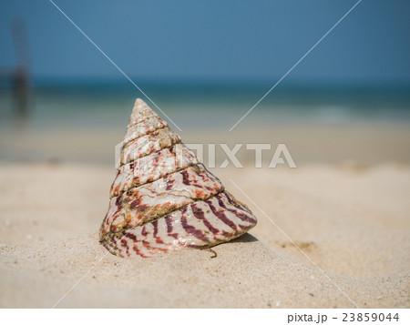 Sea shell on the beach 23859044