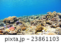 阿嘉島 海 海中の写真 23861103