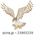 鷹 飛ぶ 白バック 23865239