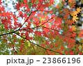 紅葉 楓 初秋の写真 23866196