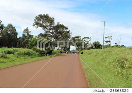 道路に動物がいるイースター島の風景 23868826