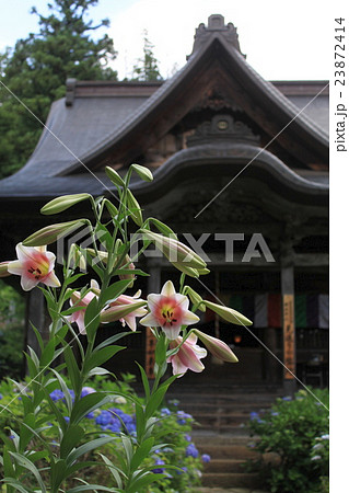 百合の花と善光寺 23872414