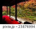 金剛輪寺 明寿院庭園 庭園の写真 23876994