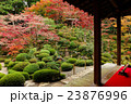 金剛輪寺 明寿院庭園 庭園の写真 23876996