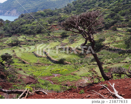 野崎島 段々畑の遺構 23877633