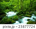 奥入瀬渓流 九十九島 23877724