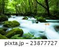 奥入瀬渓流 23877727