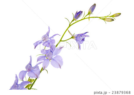wild flowersの写真素材 [23879368] - PIXTA
